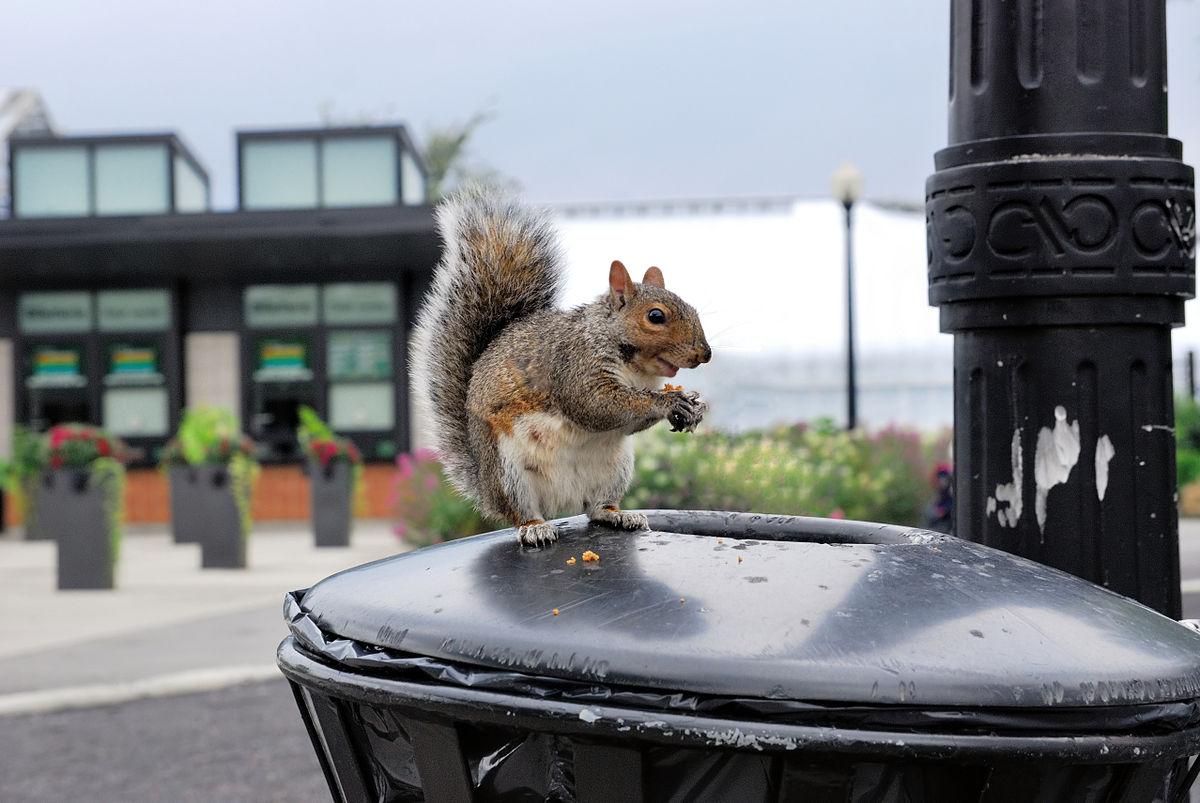 1200px-urban_wildlife_-_squirrel