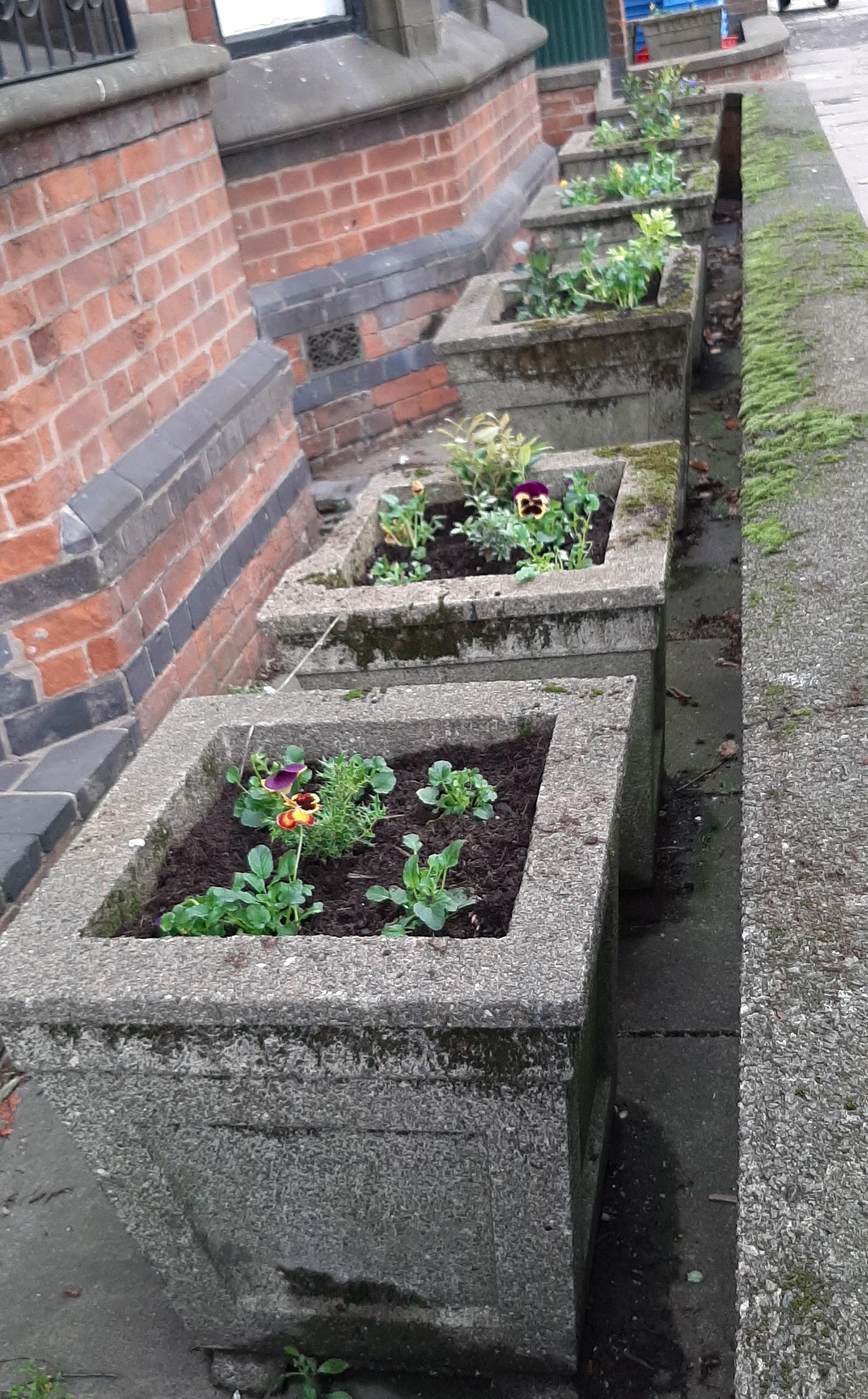 Guerilla gardening 20201007_082041